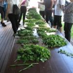 Kar lepo zbirko različnih uporabnih rastlin smo nabrali.