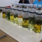 Degustacija čajev