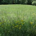 Naš travnik.