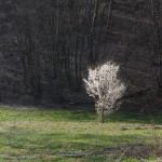 Pomlad!
